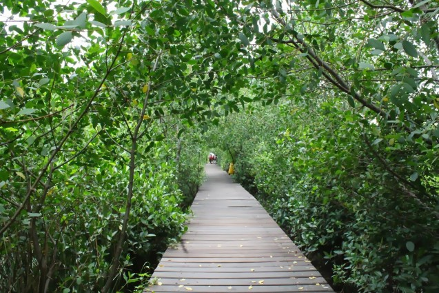 Wisata Hutan Mangrove Wonorejo Surabaya