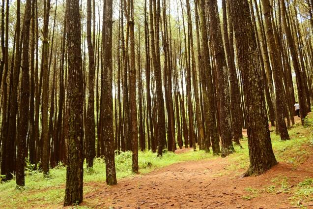 Tempat Wisata Sejuk Dan Dingin Di Pinus Aja