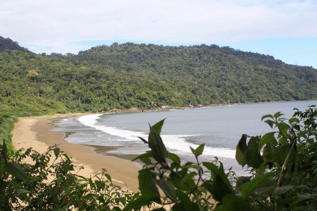 Wisata Pantai Bandealit di Jember