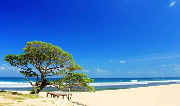Pohon di Pantai Pok Tunggal